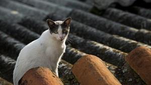 cat-637156