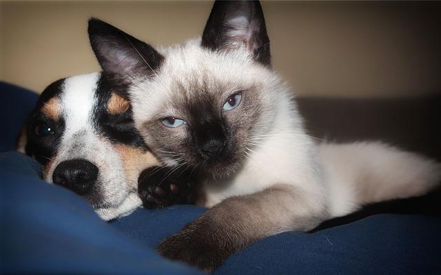 Psi a kočky si žádají Brit Care! | iZPRÁVY